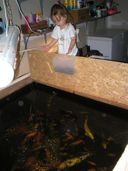 Bickal Koi Farm How To Build An Indoor Koi Pond