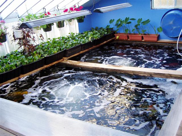 Virtual tour of the bickal koi farm operation in toddville for Koi tank size