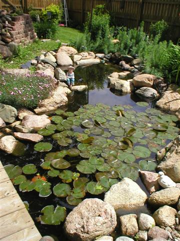 I Helped This Home Owner Design This Pond. The Homeowner Did All Of The  Work. There Is A Waterfall, Followed By A Small Stream, And The Main Pool.